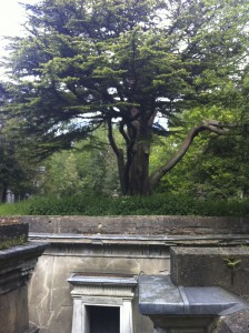 Old Tree in Highgate